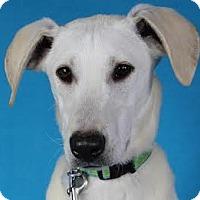 Adopt A Pet :: Sonia - Minneapolis, MN