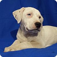 Adopt A Pet :: Stewart - Orange Lake, FL