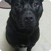 Adopt A Pet :: Midnite - Gary, IN