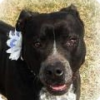 Adopt A Pet :: Ellie Mae - Columbia, TN