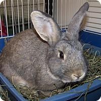 Adopt A Pet :: Taylor - Alexandria, VA