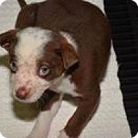 Adopt A Pet :: Reno - Athens, AL