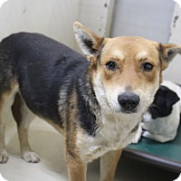 Adopt A Pet :: A04 Blakeley - Odessa, TX