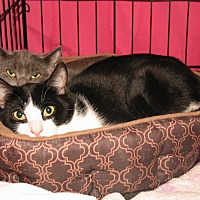 Adopt A Pet :: Charlotte and Lennie - Milford, MA