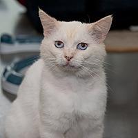 Adopt A Pet :: Cleveland - Wilmington, DE