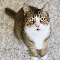 Adopt A Pet :: Kessler - Chattanooga, TN