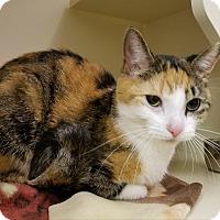 Adopt A Pet :: Thelma - Elyria, OH