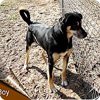 Adopt A Pet :: Boy - Ozark, AL
