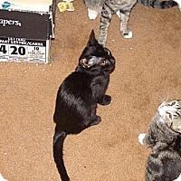 Adopt A Pet :: Boris - 4-12-12 - Scottsdale, AZ