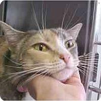 Adopt A Pet :: Grace-Anne - Lunenburg, MA