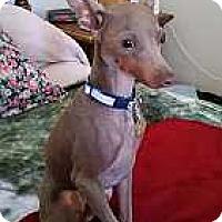 Adopt A Pet :: Marley -- ADOPTION PENDING - McDonough, GA