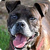 Adopt A Pet :: Frankie - Charlotte, NC