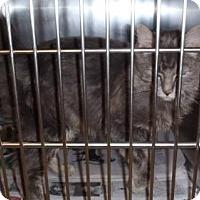Adopt A Pet :: Zeus - Hamilton, ON