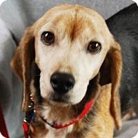 Adopt A Pet :: Betty - Minneapolis, MN