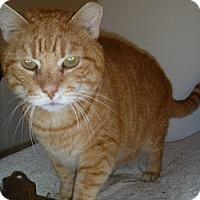 Adopt A Pet :: Zane - Hamburg, NY