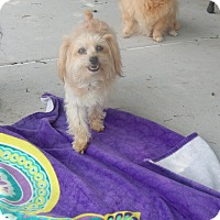 Adopt A Pet :: Opie - West Deptford, NJ