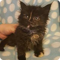 Adopt A Pet :: Fiddle - Union, KY
