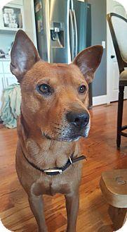 Labrador Retriever Mix Dog for adoption in Charlotte, North Carolina - Flounder