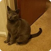 Adopt A Pet :: Luna - Newtown Square, PA