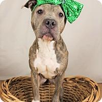 Adopt A Pet :: Mistica (ADOPTION PENDING) - Fredericksburg, VA