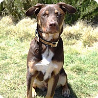 Adopt A Pet :: Referral - Bailey in NM - Denver, CO