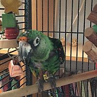 Adopt A Pet :: Baby - Punta Gorda, FL