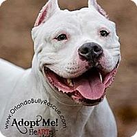 Adopt A Pet :: Sky - Orlando, FL