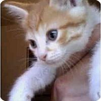 Adopt A Pet :: Ali - Davis, CA