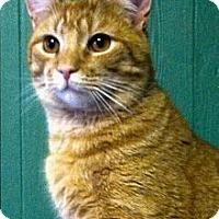 Adopt A Pet :: Baxter - Medway, MA