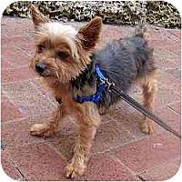 Adopt A Pet :: Ollie - Homestead, FL