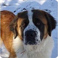 Adopt A Pet :: Chanel - Toronto/Etobicoke/GTA, ON