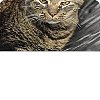Adopt A Pet :: teddy - El Cajon, CA
