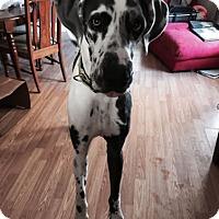 Adopt A Pet :: Jaxson - Hanover, MD
