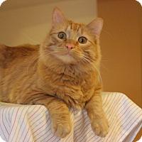 Adopt A Pet :: Petrina - St. Louis, MO