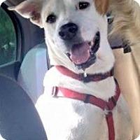 Adopt A Pet :: Amore - Scottsdale, AZ