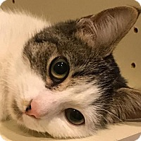 Adopt A Pet :: Mayflower - Philadelphia, PA