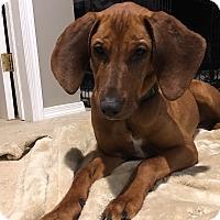 Adopt A Pet :: Ember - Baltimore, MD
