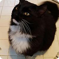 Adopt A Pet :: Willie Nelson - McDonough, GA