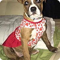 Adopt A Pet :: Rousey - Dayton, OH