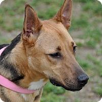 Adopt A Pet :: Lena - Dripping Springs, TX