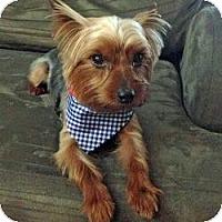 Adopt A Pet :: Peanut - Miami, FL