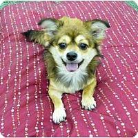 Adopt A Pet :: Penelope - Mocksville, NC
