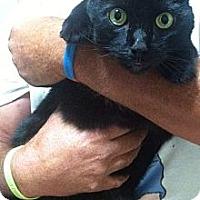 Adopt A Pet :: Romeo - Jacksboro, TN