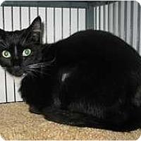 Adopt A Pet :: Felix - Shelton, WA