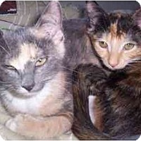 Adopt A Pet :: Abby - Quincy, MA
