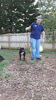 Labrador Retriever/German Shepherd Dog Mix Dog for adoption in Inman, South Carolina - Backster