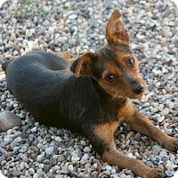 Adopt A Pet :: Missy - Lufkin, TX