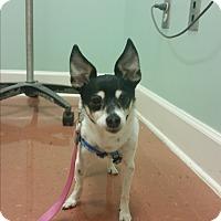 Adopt A Pet :: Mags - Marietta, GA