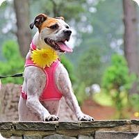 Terrier (Unknown Type, Medium) Mix Dog for adoption in Apex, North Carolina - Maebe
