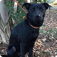 Adopt A Pet :: Marlena - Starkville, MS